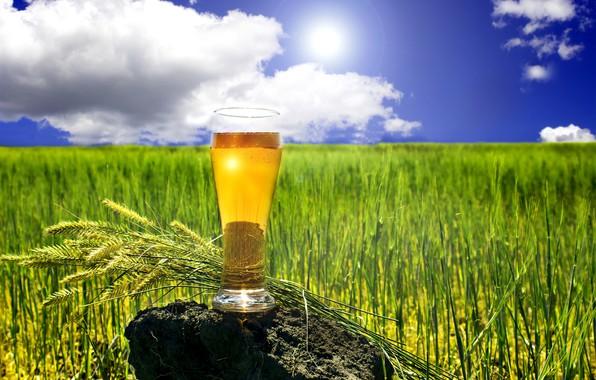 Картинка поле, лето, небо, трава, солнце, облака, стакан, камень, пиво, горизонт, колоски, боке