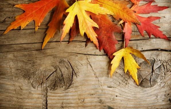 Картинка листья, доски, осенние листья