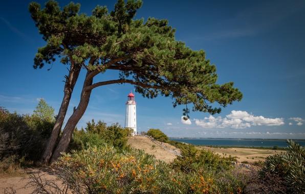Картинка дерево, побережье, маяк