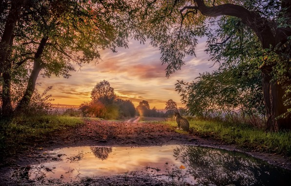 Картинка дорога, осень, кошка, закат, природа, туман, лужа