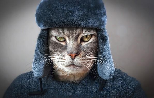 Картинка глаза, кот, взгляд, морда, рендеринг, серый, фон, одежда, шапка, фотошоп, портрет, арт, образ, кофта, котяра, ...