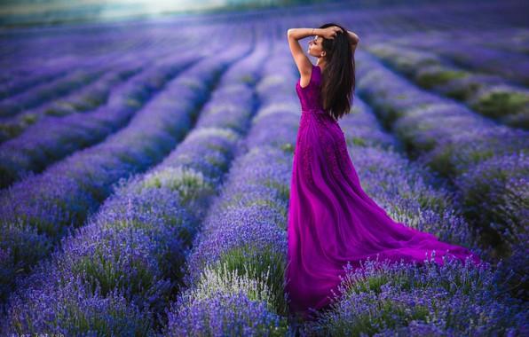 Картинка поле, девушка, поза, настроение, платье, лаванда, Алексей Латыш