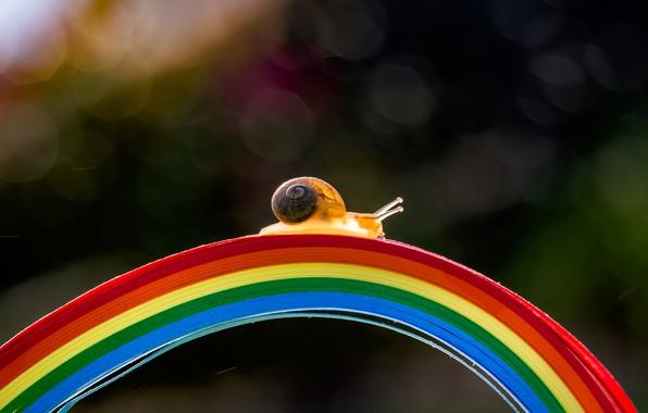 Картинка макро, свет, полоски, мост, полосы, темный фон, улитка, радуга, дуга, ракушка, мостик, цвета радуги, разноцветный, …