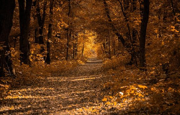 Картинка фото, Природа, Осень, Деревья, Лес, Листья, Тропа
