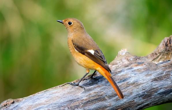 Картинка дерево, птица, птаха