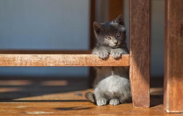 Картинка кошка, взгляд, свет, поза, котенок, серый, фон, маленький, малыш, пол, тени, котёнок, стойка, ножки мебели