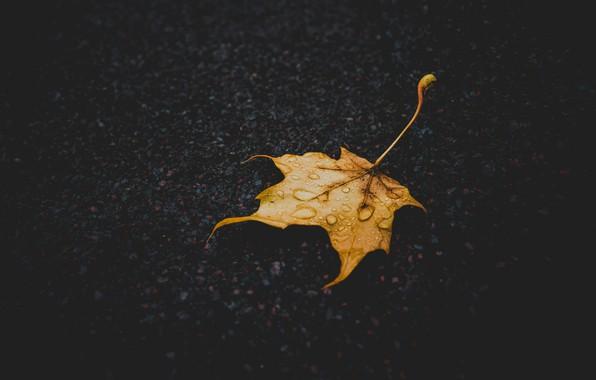 Картинка осень, земля, листок, macro