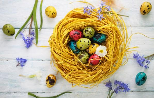 Картинка цветы, праздник, яйца, пасха, гнездо