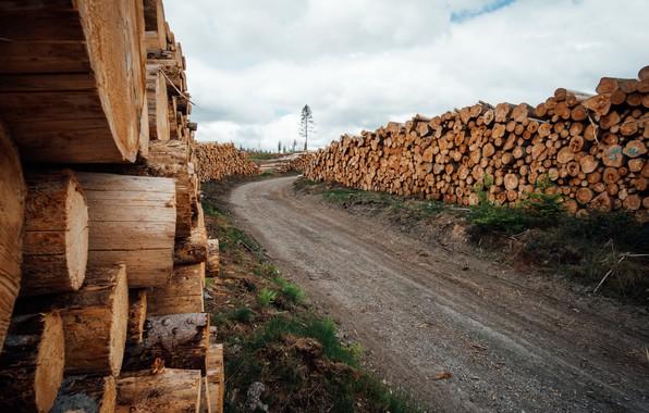 Картинка дорога, природа, дрова, брёвна