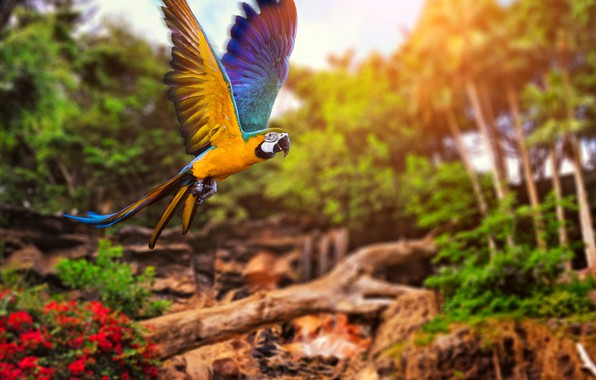 Картинка colors, colorful, trees, nature, bird, bokeh, animal, Parrot, depth of field