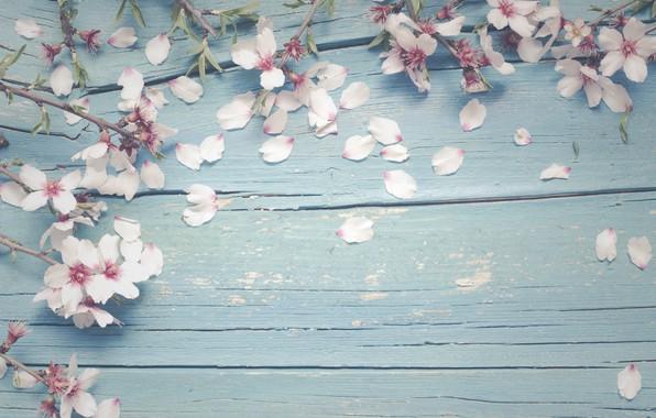 Картинка цветы, ветки, apple, весна, яблоня, цветение, wood, blossom, flowers, spring