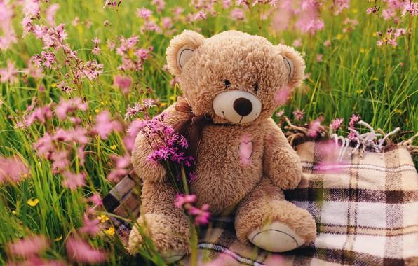 Картинка поле, цветы, мишка, love, field, heart, pink, flowers, romantic, spring, teddy bear, cute, meadow