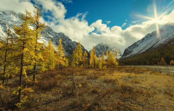 Картинка зелень, солнце, лучи, деревья, горы, камни, склон, Алтай