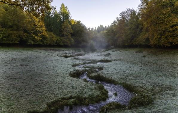 Картинка природа, туман, речка