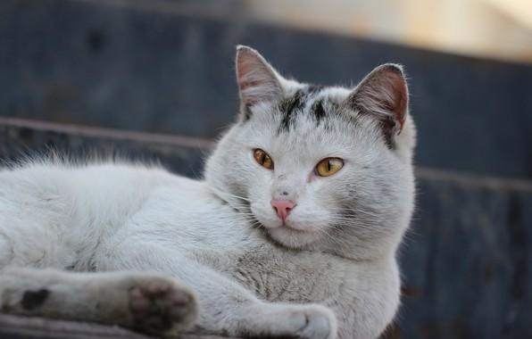 Картинка кот, взгляд, фон, мордашка