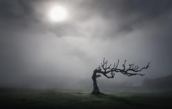 Картинка дерево, Солнце, tree, sun, Kai Hornung