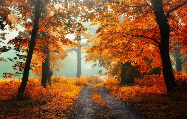 Картинка дорога, осень, лес, трава, листья, свет, деревья, пейзаж, ветки, природа, туман, парк, настроение, ветви, стволы, …