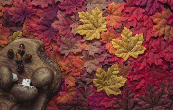 Картинка осень, листья, фон, дерево, грибы, colorful, red, доска, клен, wood, background, autumn, leaves, осенние, maple