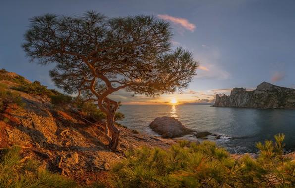 Картинка море, солнце, лучи, пейзаж, закат, горы, природа, дерево, скалы, Крым, сосна, Новый Свет, реликтовая роща