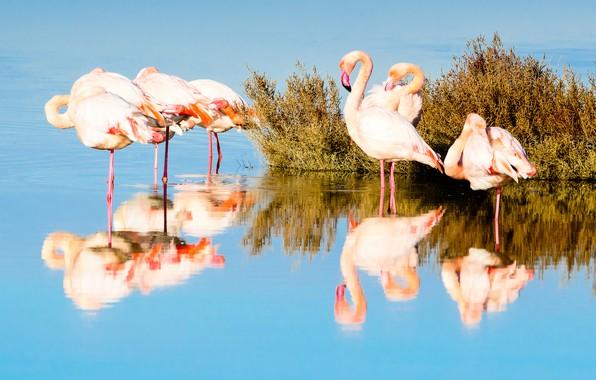 Картинка вода, свет, птицы, отражение, стая, кусты, фламинго, водоем