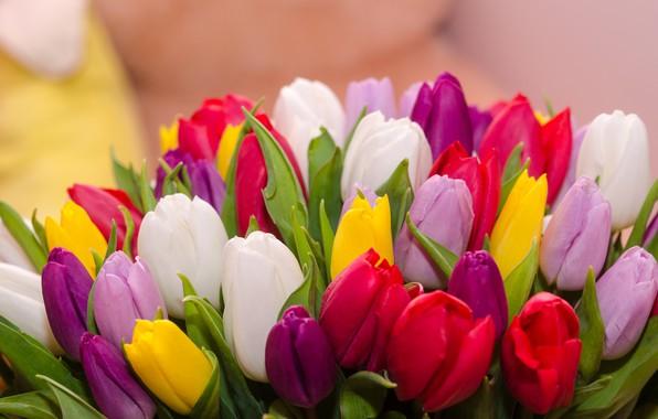 Картинка цветы, букет, colorful, тюльпаны, flowers, tulips, spring, multicolored