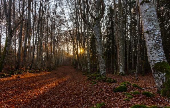 Картинка дорога, лес, утро