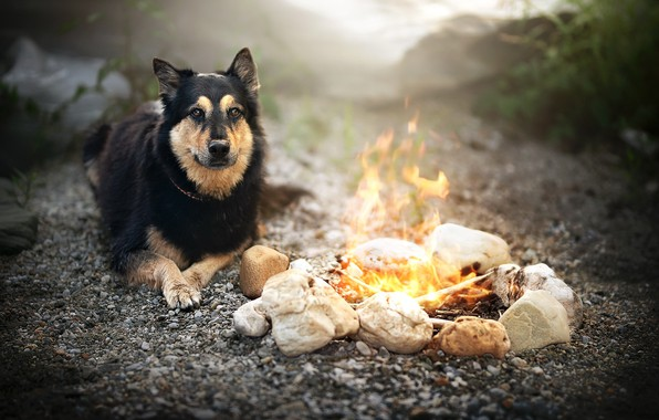 Картинка друг, собака, костёр