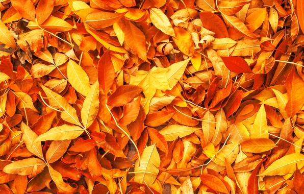 Картинка осень, листья, фон, желтые, colorful, yellow, background, autumn, leaves, осенние