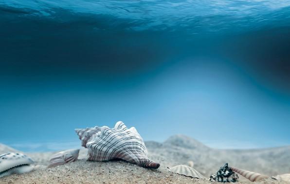 Картинка Underwater, Seabed, Mollusca