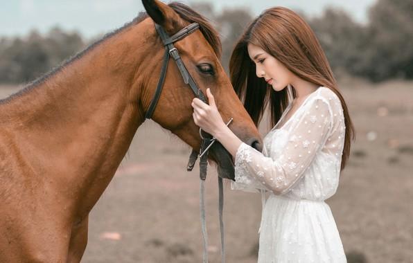 Картинка взгляд, морда, девушка, природа, лицо, фон, друг, конь, лошадь, портрет, руки, дружба, профиль, шатенка, азиатка, ...