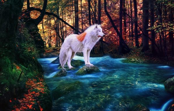 Картинка осень, лес, река, альбинос, белый волк