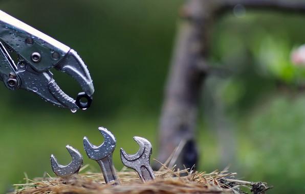 Картинка природа, гнездо, ключи, гайка