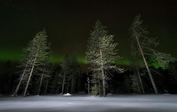 Картинка зима, лес, ночь, сияние