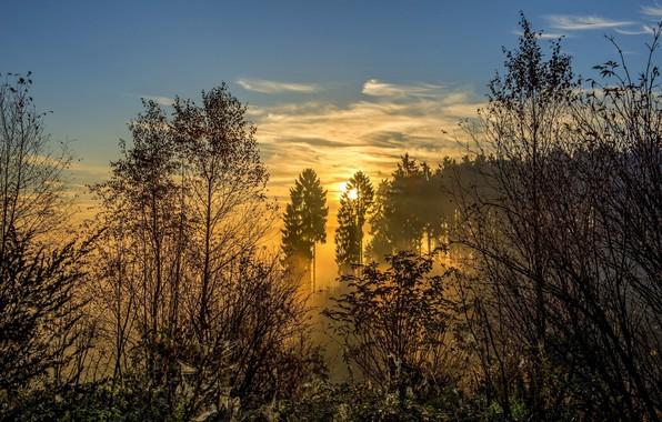 Картинка лес, солнце, пейзаж, природа, туман, восход, красота, утро