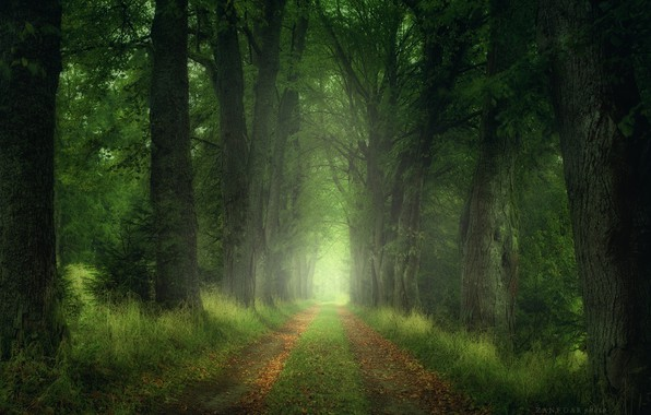 Картинка дорога, лес, листья, деревья, Природа, Zan Foar