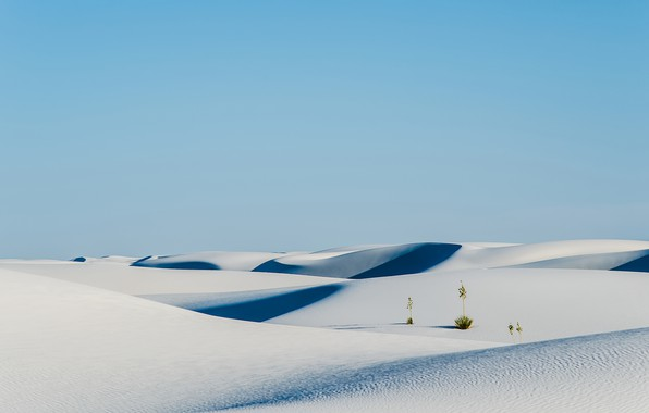 Картинка sky, nature, sand, plants, Desert, shrubs, white sand, dunes