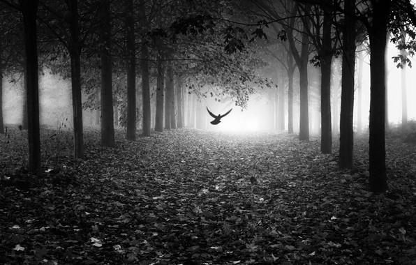 Картинка листья, свет, туман, парк, птица, light, аллея, bird, park, leaves, fog, alley, Marc Huybrighs