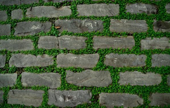 Картинка трава, камни, дорожка