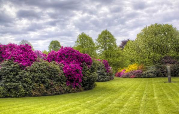 Картинка лето, деревья, цветы, HDR, сад, trees, азалия, Kenwood