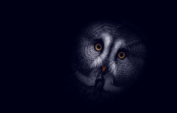 Картинка фон, сова, птица