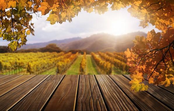 Картинка осень, листья, деревья, парк, forest, nature, wood, park, autumn, leaves, tree