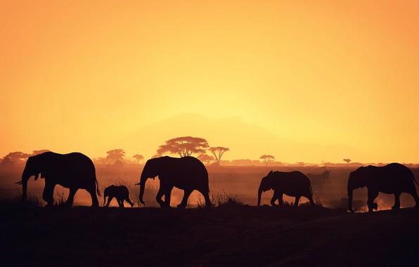 Обои night, elephants, africa, herd, baby elephant