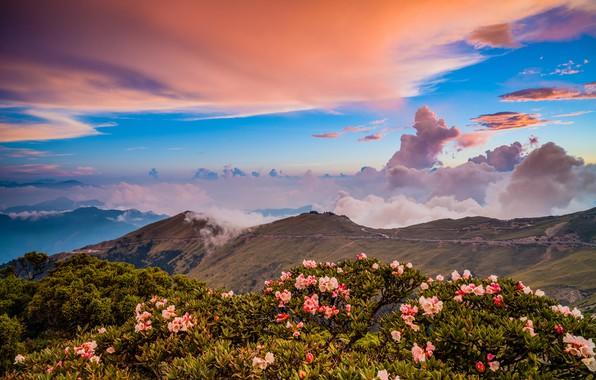 Картинка зелень, облака, пейзаж, цветы, горы, природа, туман, синева, холмы, склоны, вершины, красота, весна, утро, Азия, …