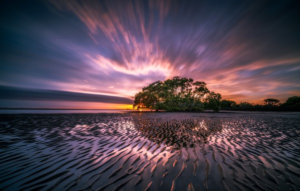 Картинка море, пейзаж, природа, восход, дерево, рассвет, берег, утро, отлив