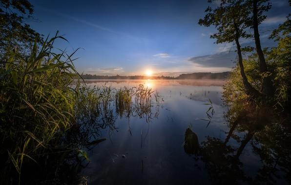 Картинка деревья, озеро, восход, рассвет, утро, камыш, Россия, Шатурское озеро