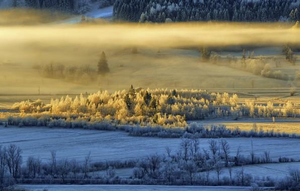 Картинка зима, свет, туман, утро