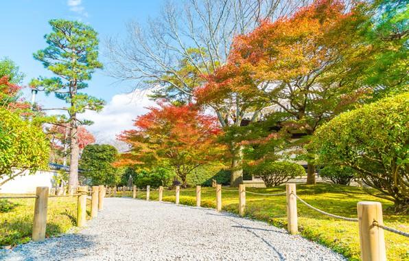 Картинка осень, листья, деревья, парк, colorful, landscape, park, autumn, leaves, tree, path, fall