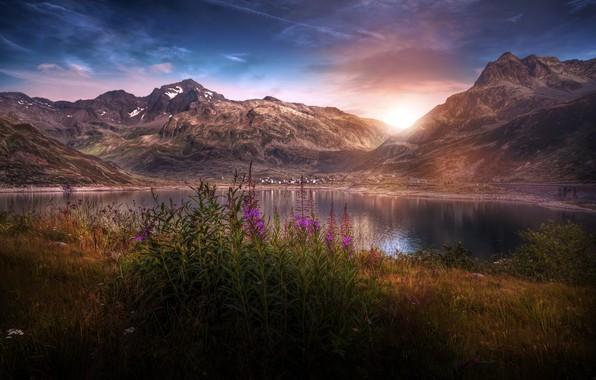 Картинка цветы, горы, природа, озеро