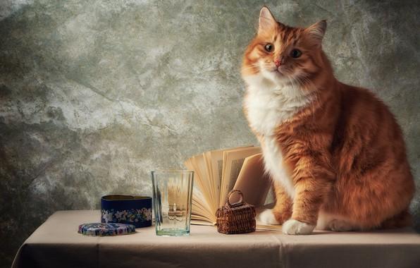 Картинка кошка, кот, взгляд, морда, стакан, поза, стол, серый, фон, стена, портрет, рыжий, шкатулка, книга, натюрморт, …