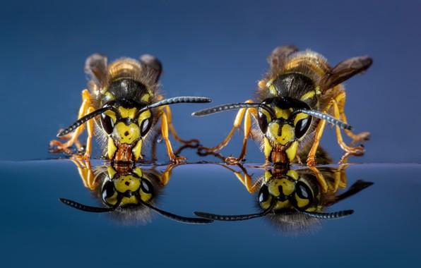 Картинка насекомые, природа, Wasps
